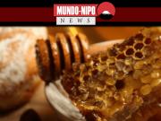 Imagem ilustrativa de mel com fava