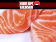 Fatias de sashimi de salmão