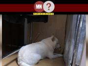 Cachorr com medo da tempestade