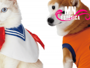 Pets usando cosplay