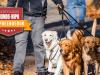 Dogwalker passeando com cachorros