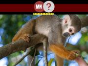 Macaquinho da Squirrel Monkey Garden em Ishigaki