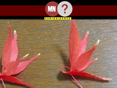 Origamis feitos de folhas