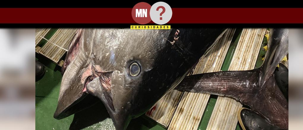 Atum mais caro é vendido no japao