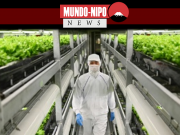 No Japão, a agricultura vertical está decolando, pois os métodos tradicionais enfrentam uma dupla ameaça do envelhecimento da população