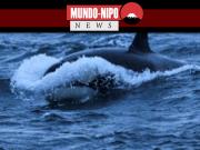 O Google disse estar desenvolvendo maneiras de usar artificial no rastreamento de baleias
