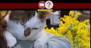 Gatinha canta enquanto é mimada pelos seus tutores