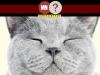 Gatos e caes japoneses também podem ter id