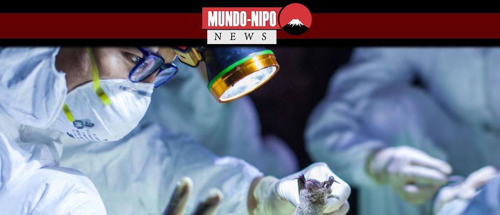 pesquisadores da China examinam um morcego capturado